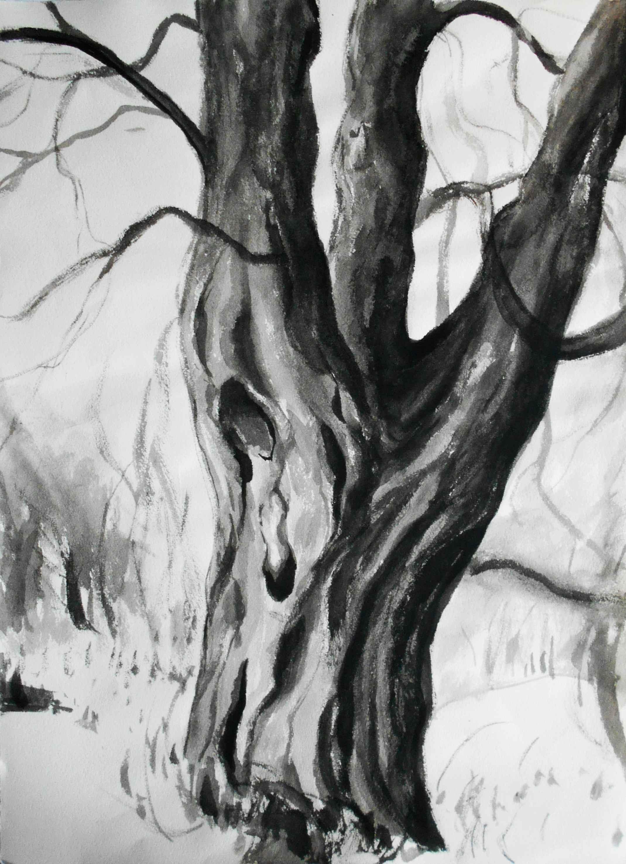 Beech,30x40cm, ink, paper, 2017