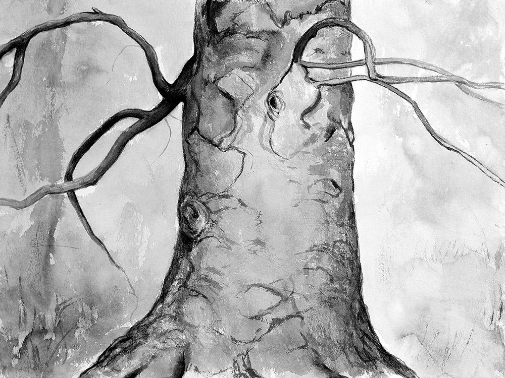 Beech, 30x40cm, ink, paper,2017