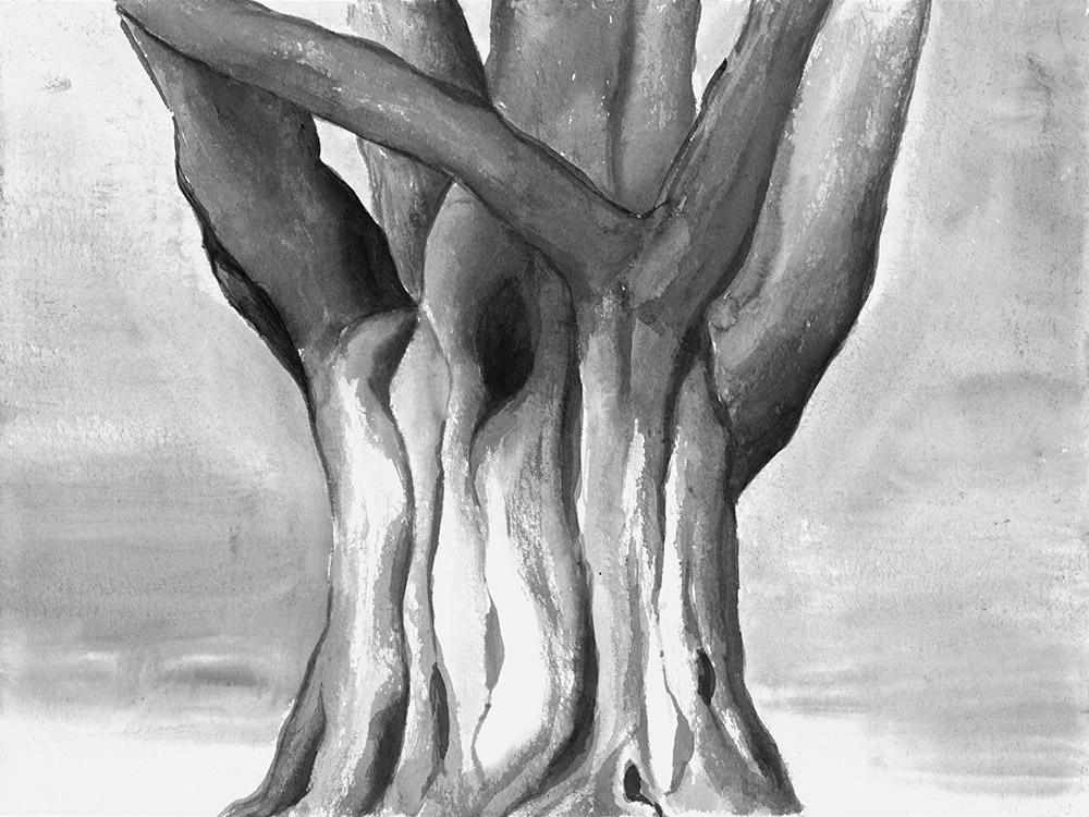 Hornbeam, 30x40cm, ink, paper, 2017