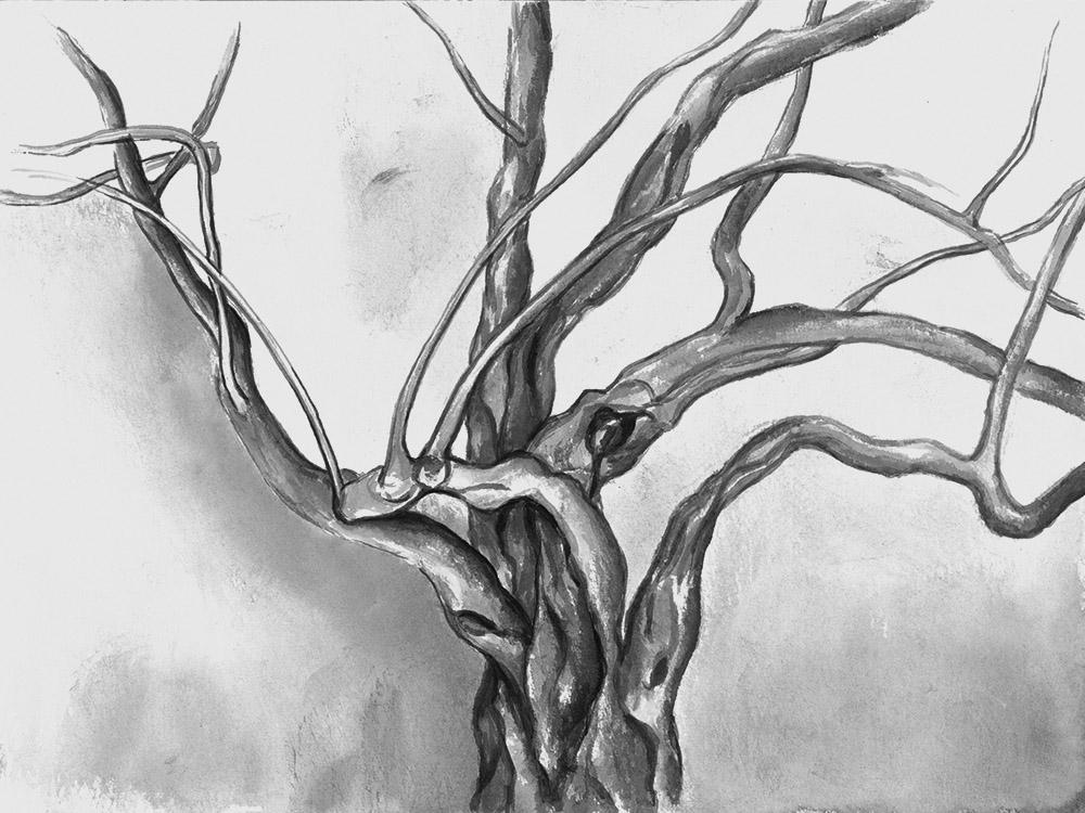 Dogwood, 30x40cm, ink, paper, 2017