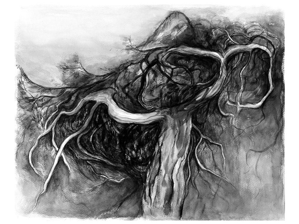 Pine, 40x50cm, ink, paper, 2017