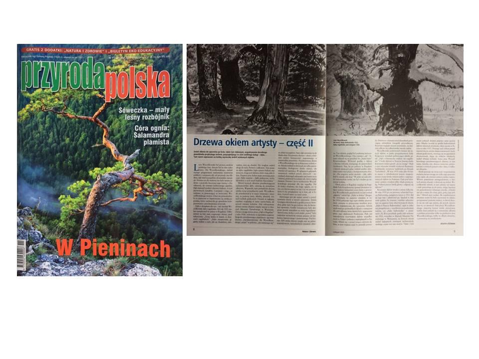 Trees seen through an artist's eyes - about old oaks, magazine Przyroda Polska (Polish nature), 2020