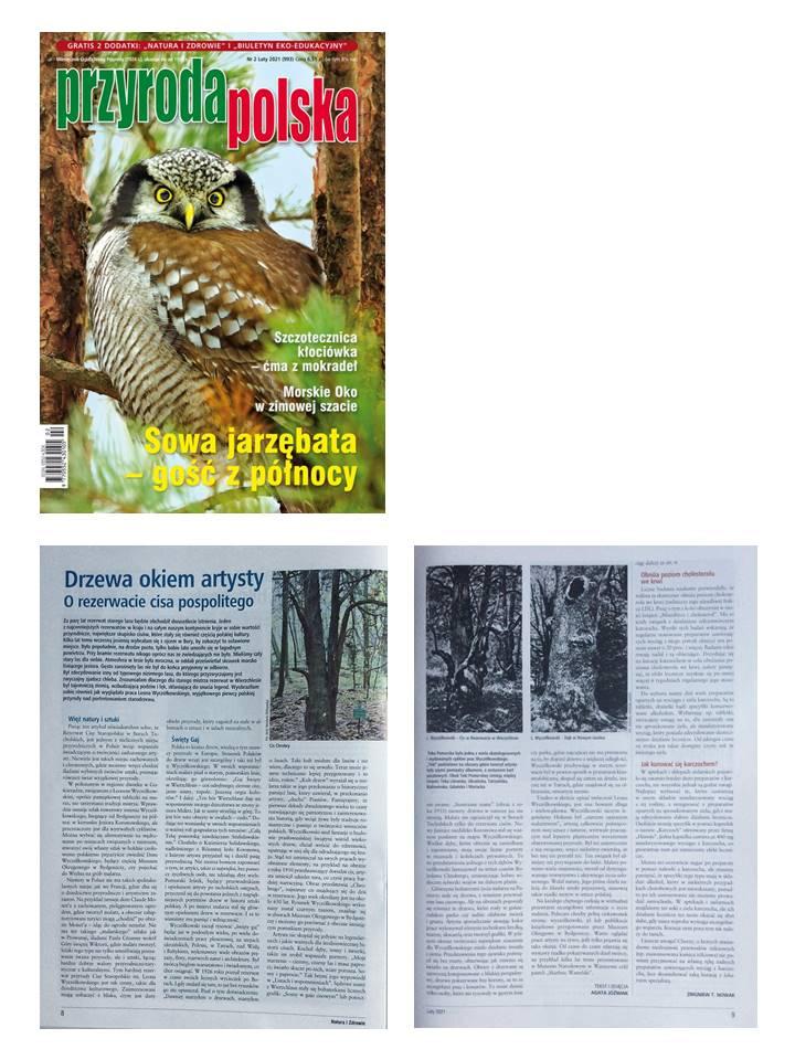 Trees seen through an artist's eyes - On the Nature Reserve of the Old Polish yew, magazine Przyroda Polska (Polish nature), 2021