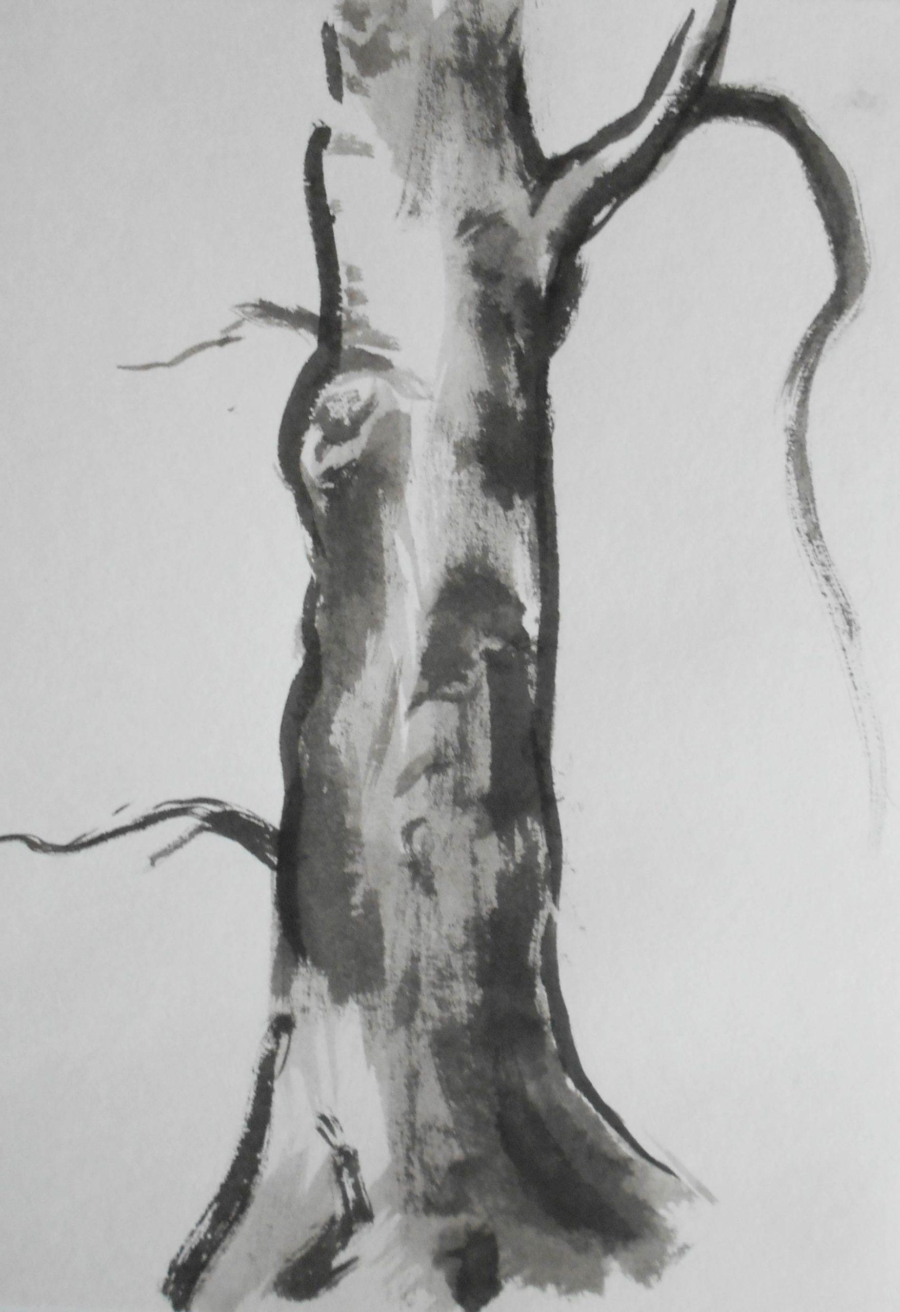 Beech, 30x40cm, ink, paper, 2017